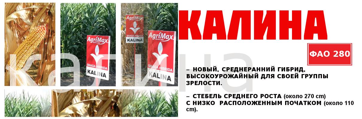 1kalina-rus